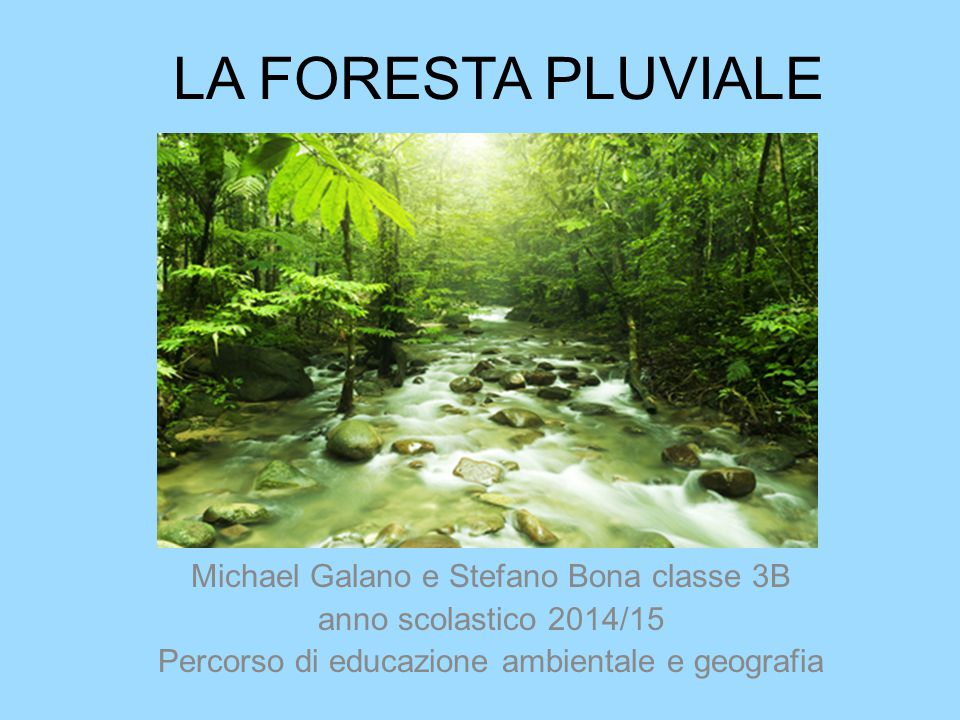 LA FORESTA PLUVIALE Michael Galano e Stefano Bona classe 3B