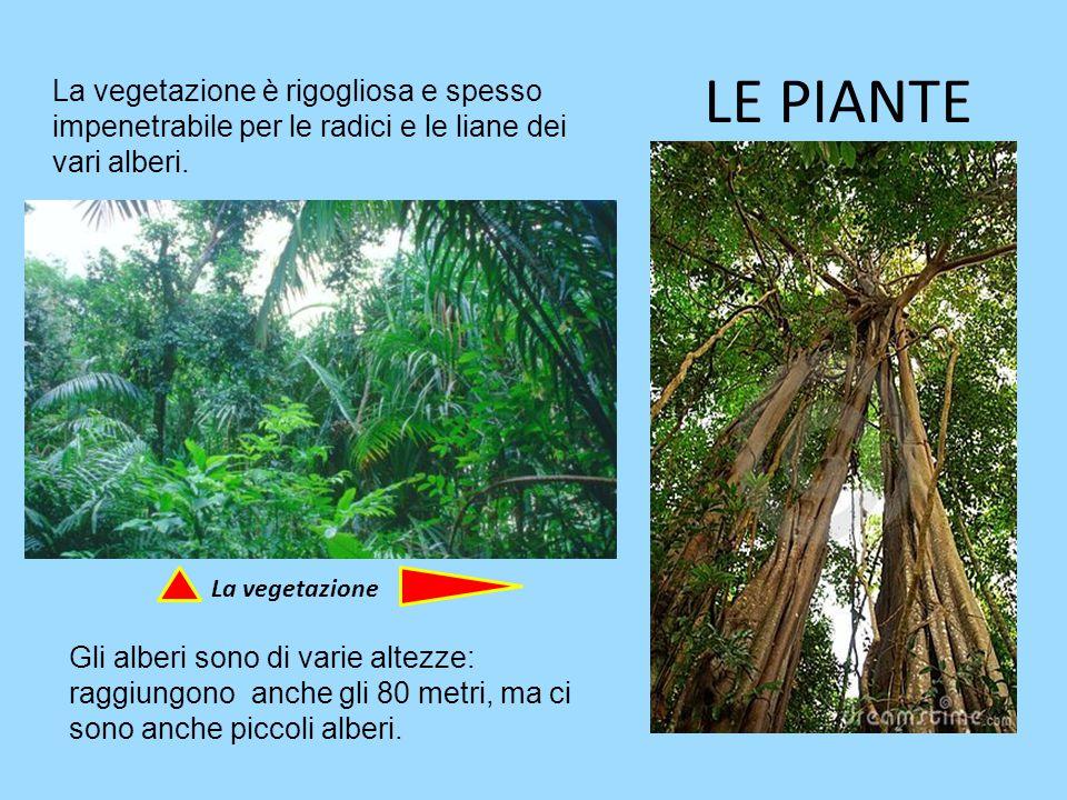 LE PIANTE La vegetazione è rigogliosa e spesso impenetrabile per le radici e le liane dei vari alberi.