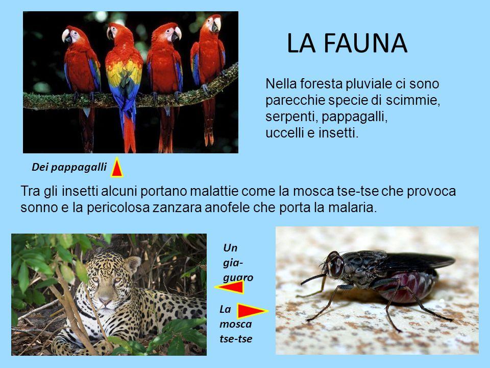 La foresta pluviale michael galano e stefano bona classe - Gli animali della foresta pluviale di daintree ...