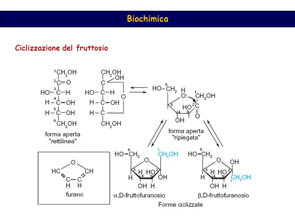 Ciclizzazione del fruttosio