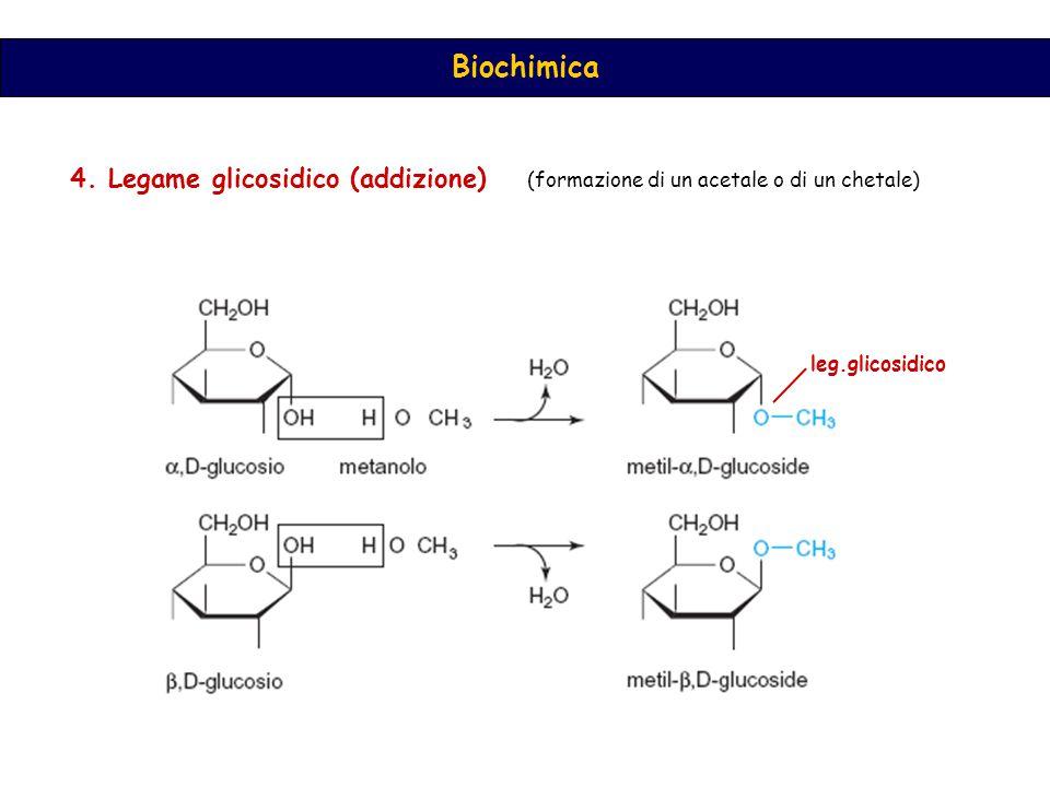 4. Legame glicosidico (addizione)