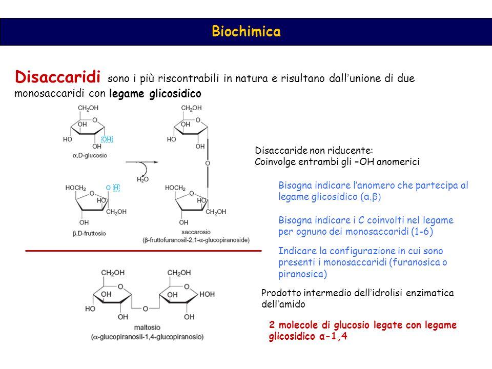 Disaccaridi sono i più riscontrabili in natura e risultano dall'unione di due monosaccaridi con legame glicosidico