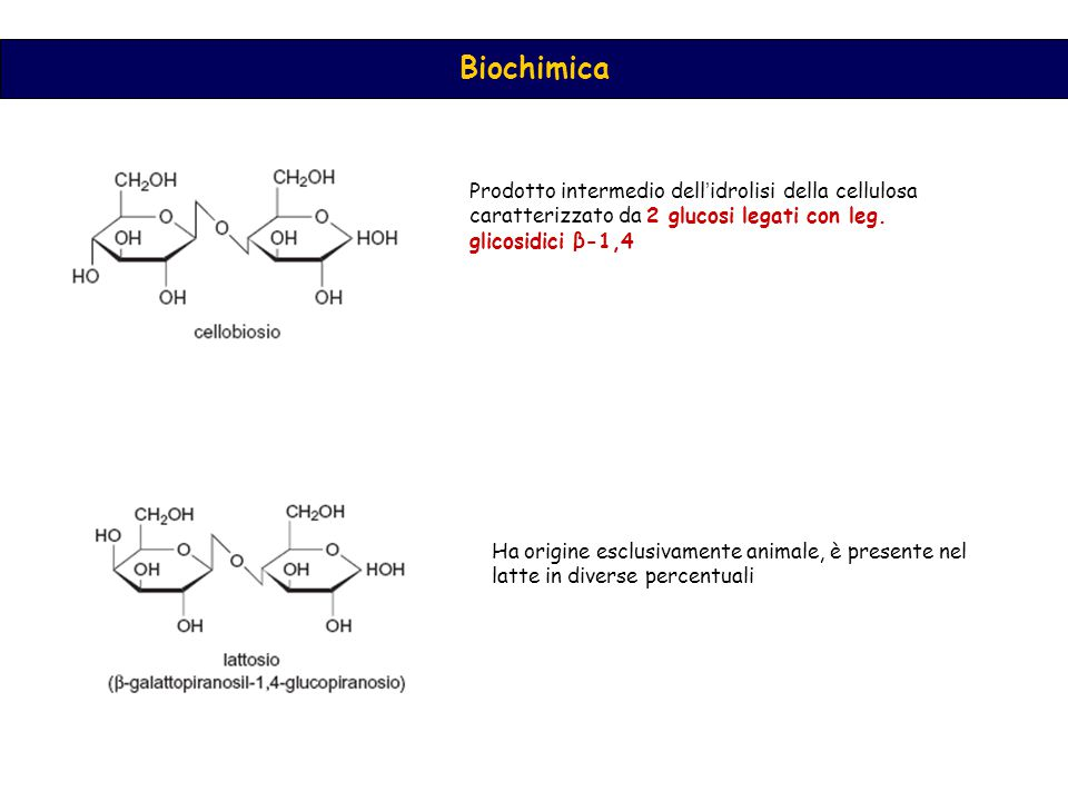 Prodotto intermedio dell'idrolisi della cellulosa caratterizzato da 2 glucosi legati con leg. glicosidici β-1,4