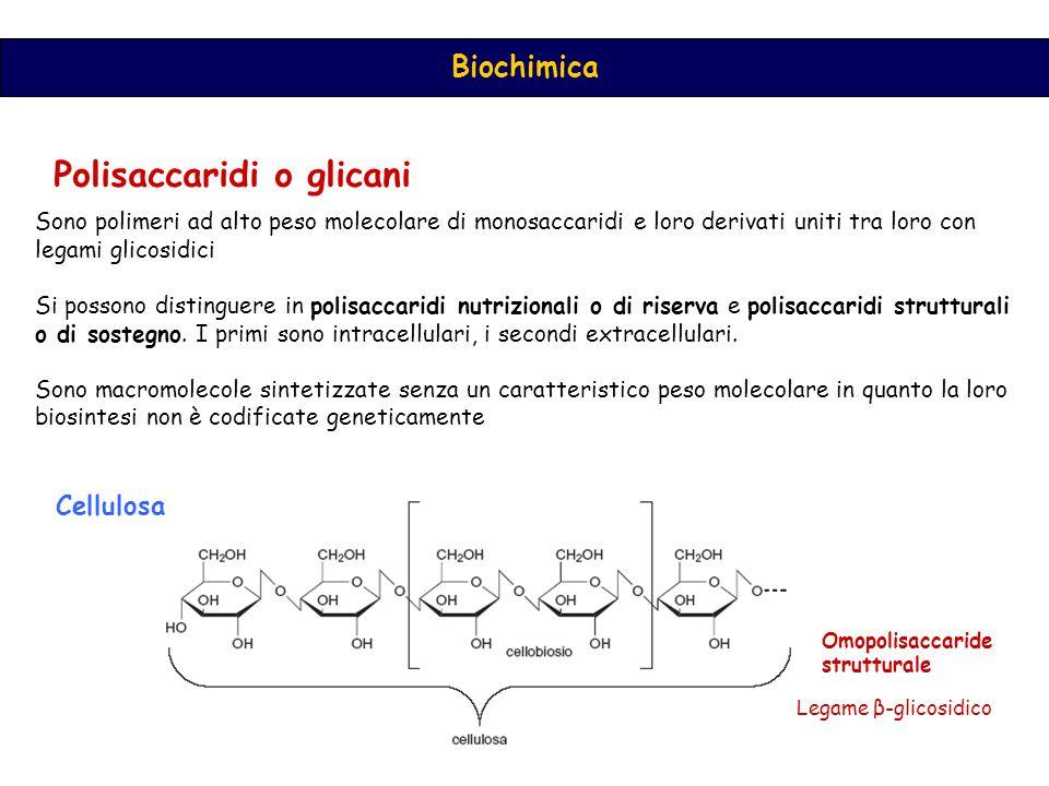 Polisaccaridi o glicani