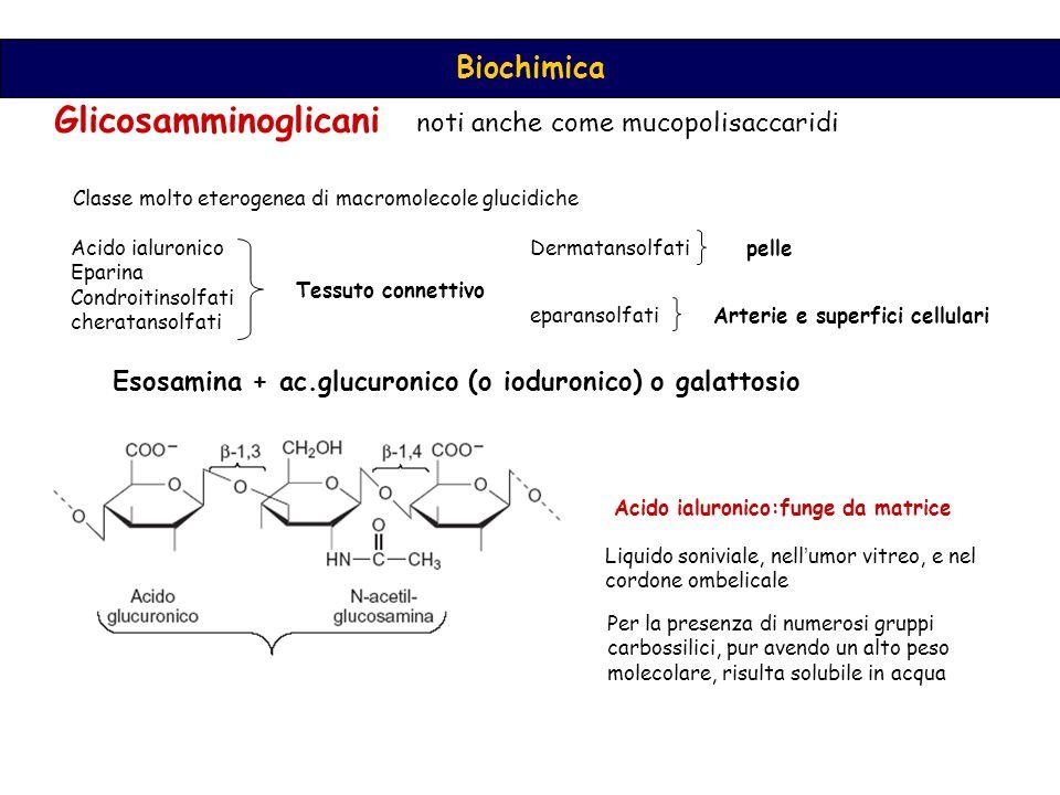 Glicosamminoglicani noti anche come mucopolisaccaridi