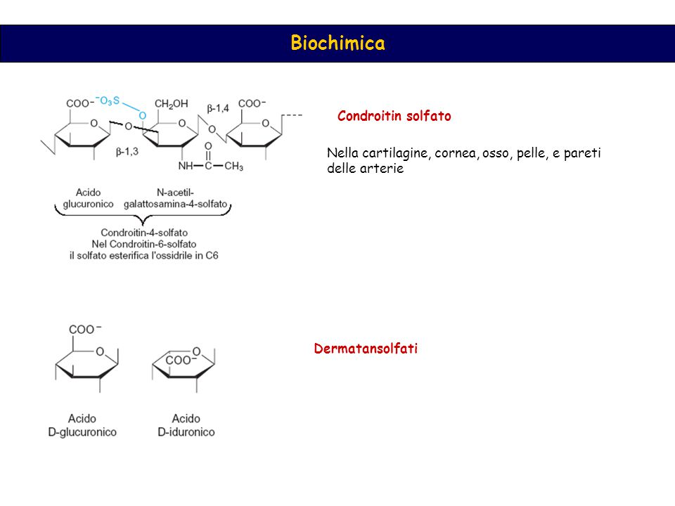 Condroitin solfato Nella cartilagine, cornea, osso, pelle, e pareti delle arterie Dermatansolfati