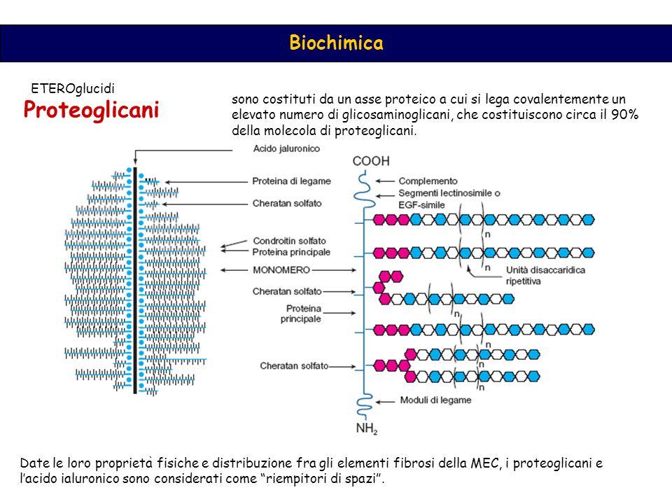 Proteoglicani ETEROglucidi