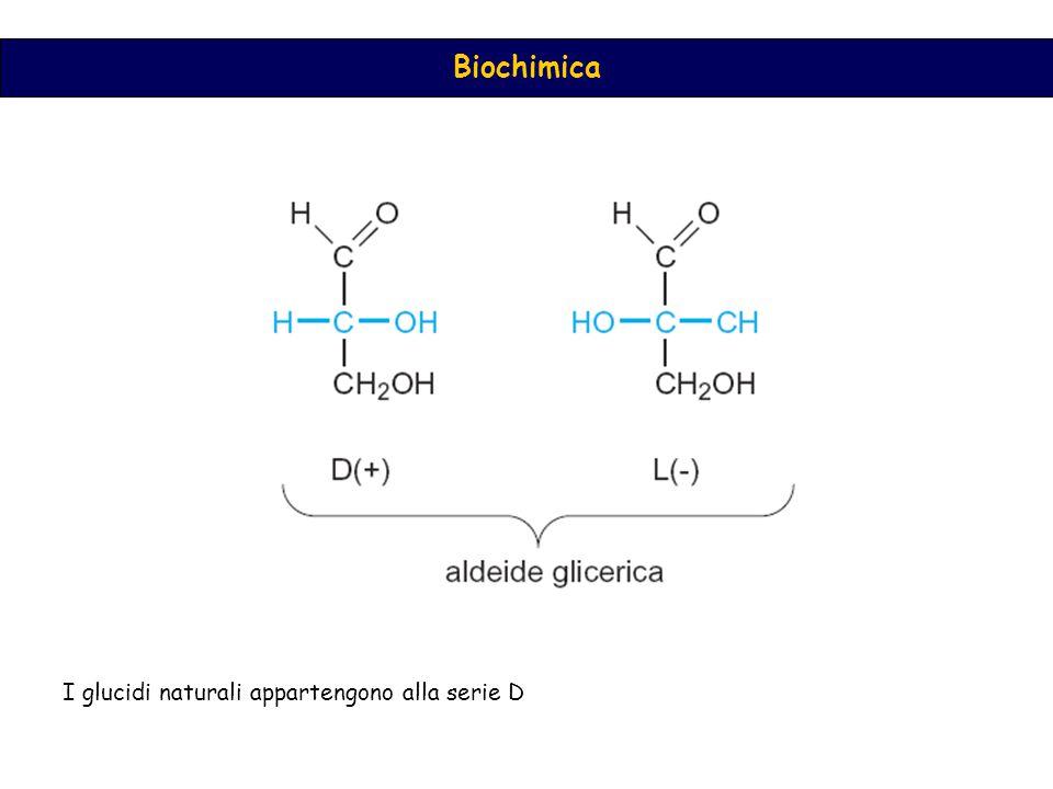 I glucidi naturali appartengono alla serie D