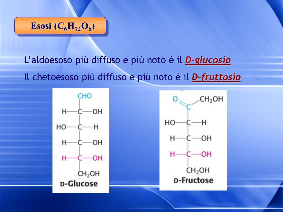 Esosi (C6H12O6) L'aldoesoso più diffuso e più noto è il D-glucosio.