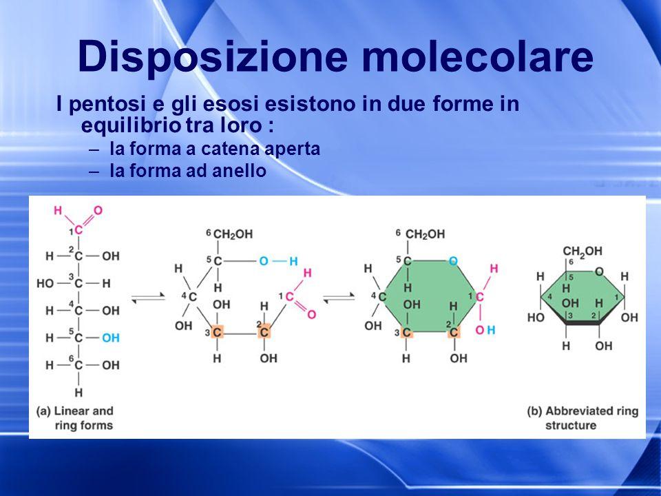Disposizione molecolare