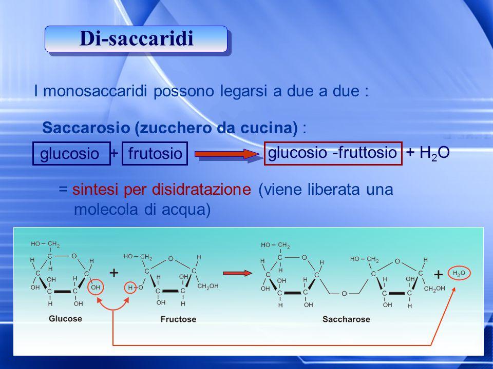 Di-saccaridi I monosaccaridi possono legarsi a due a due :