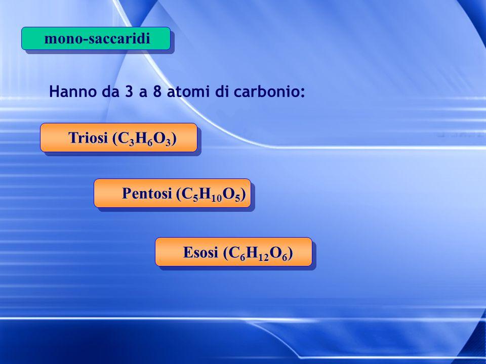 mono-saccaridi Hanno da 3 a 8 atomi di carbonio: Triosi (C3H6O3) Pentosi (C5H10O5) Esosi (C6H12O6)