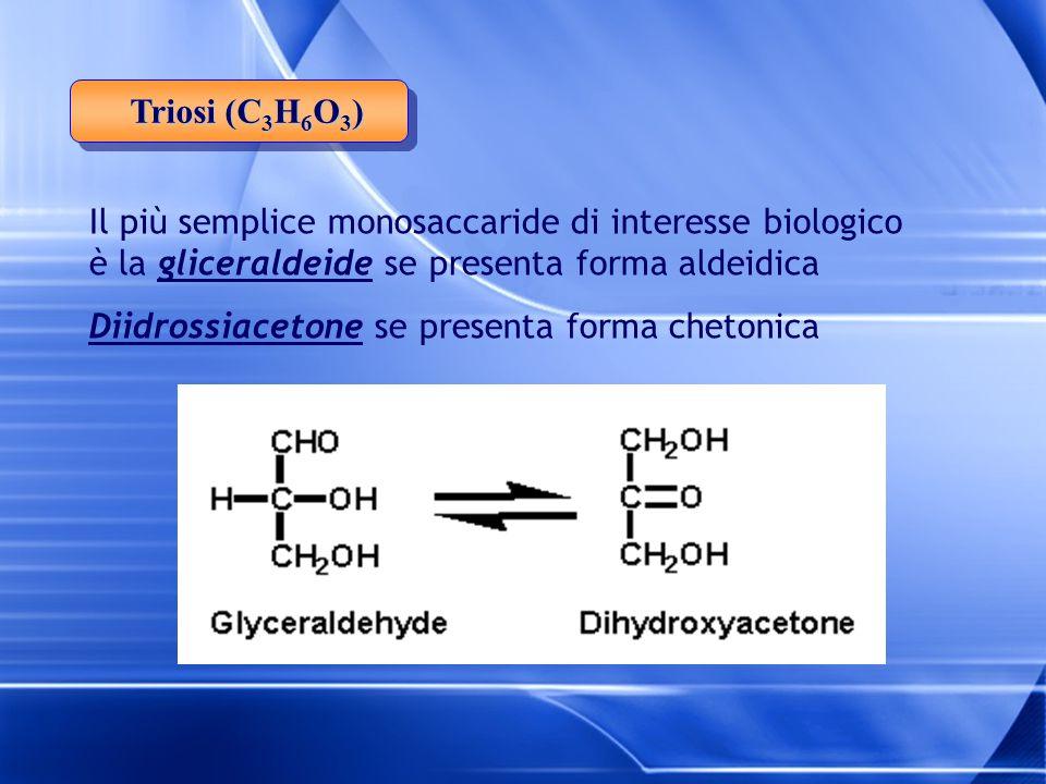 Triosi (C3H6O3) Il più semplice monosaccaride di interesse biologico è la gliceraldeide se presenta forma aldeidica.