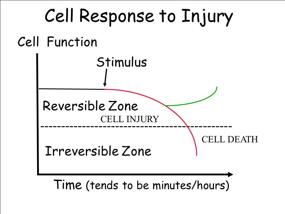 Cell Response to Injury