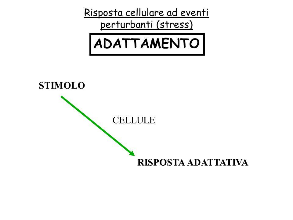 Risposta cellulare ad eventi perturbanti (stress)