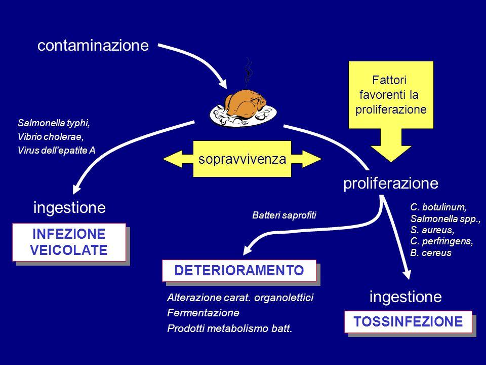 contaminazione proliferazione ingestione ingestione sopravvivenza
