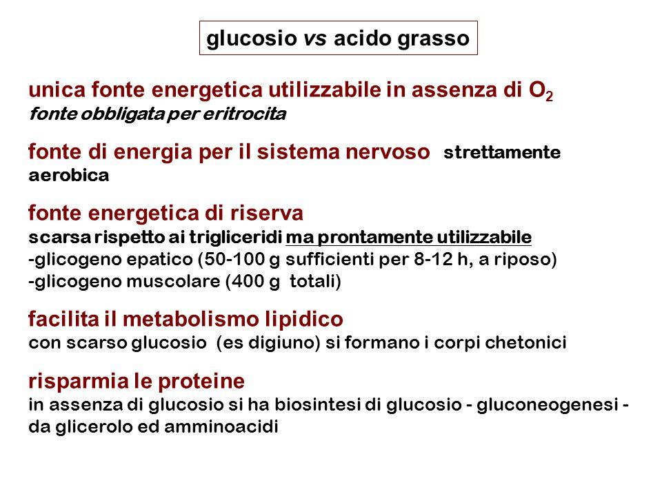 glucosio vs acido grasso