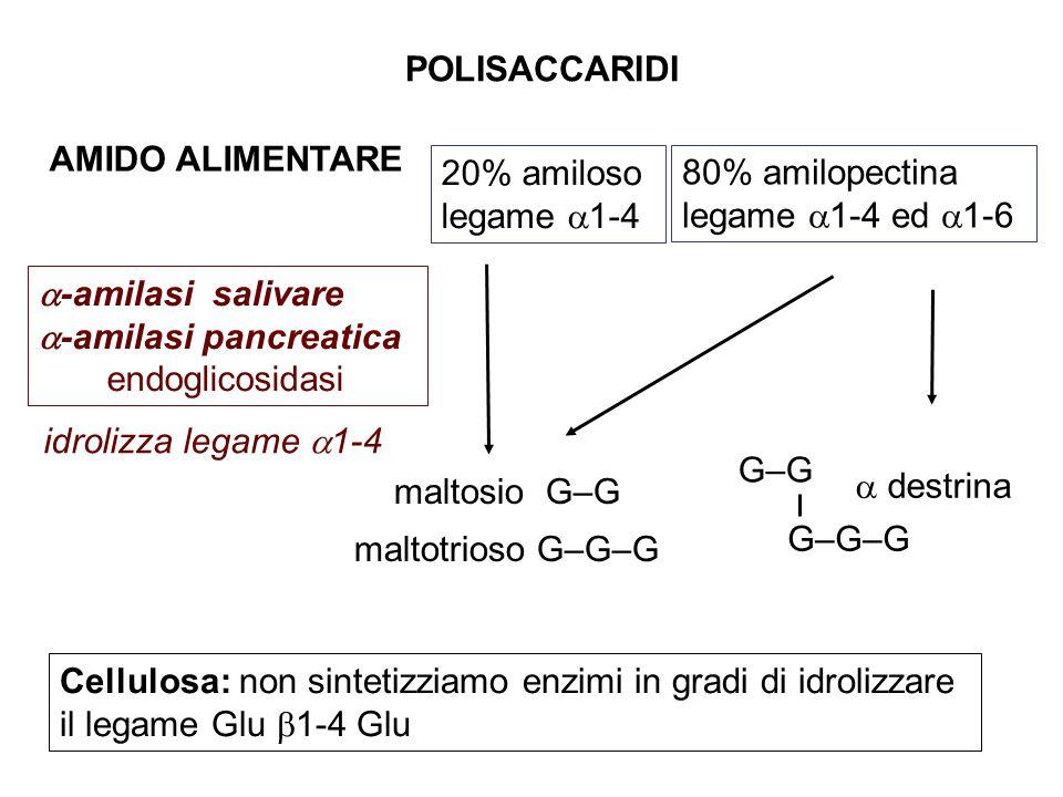 POLISACCARIDI AMIDO ALIMENTARE. 20% amiloso. legame 1-4. 80% amilopectina. legame 1-4 ed 1-6.
