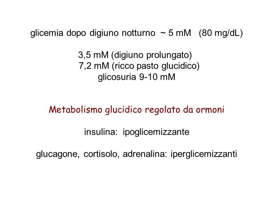glicemia dopo digiuno notturno ~ 5 mM (80 mg/dL)