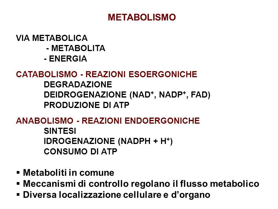 Meccanismi di controllo regolano il flusso metabolico