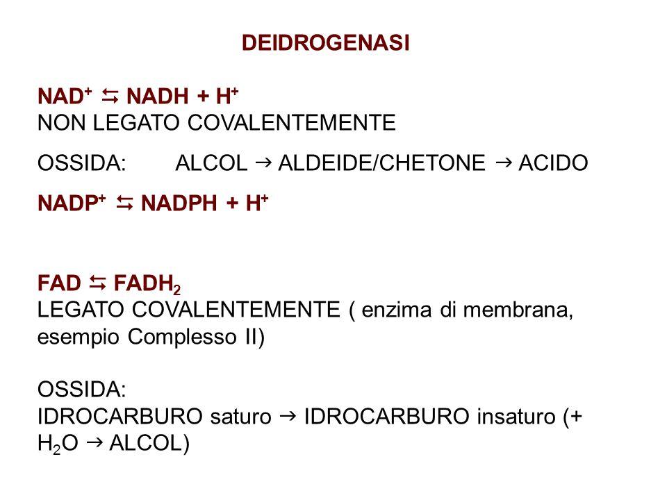 DEIDROGENASI NAD+  NADH + H+ NON LEGATO COVALENTEMENTE. OSSIDA: ALCOL  ALDEIDE/CHETONE  ACIDO.