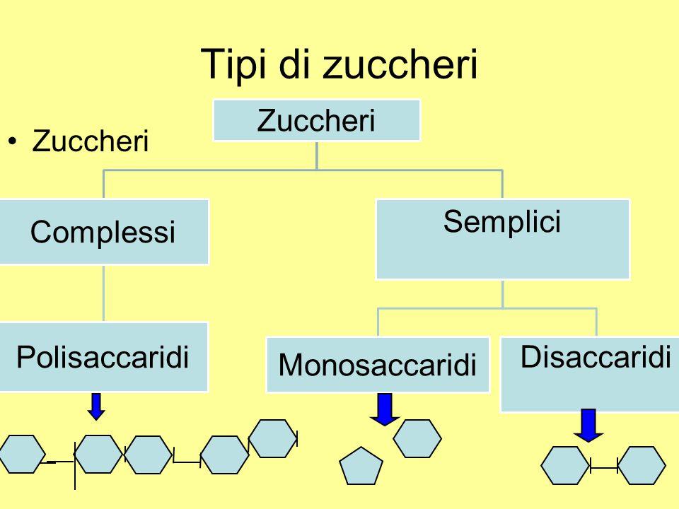 Tipi di zuccheri Zuccheri Zuccheri Complessi Polisaccaridi Semplici