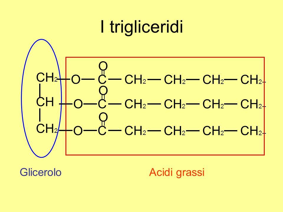 I trigliceridi O CH2 CH C CH2-- Glicerolo Acidi grassi
