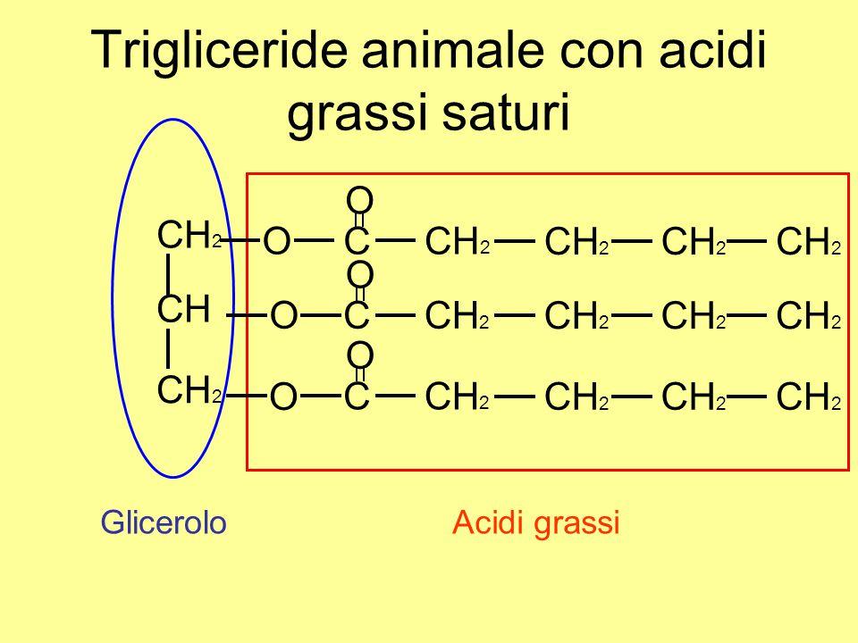 Trigliceride animale con acidi grassi saturi