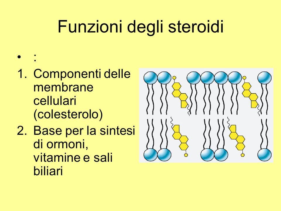 Funzioni degli steroidi