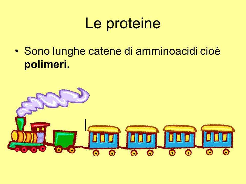 Le proteine Sono lunghe catene di amminoacidi cioè polimeri.