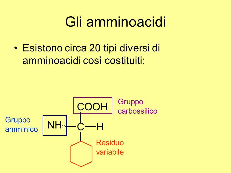Gli amminoacidi Esistono circa 20 tipi diversi di amminoacidi così costituiti: Gruppo carbossilico.