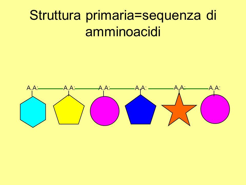 Struttura primaria=sequenza di amminoacidi