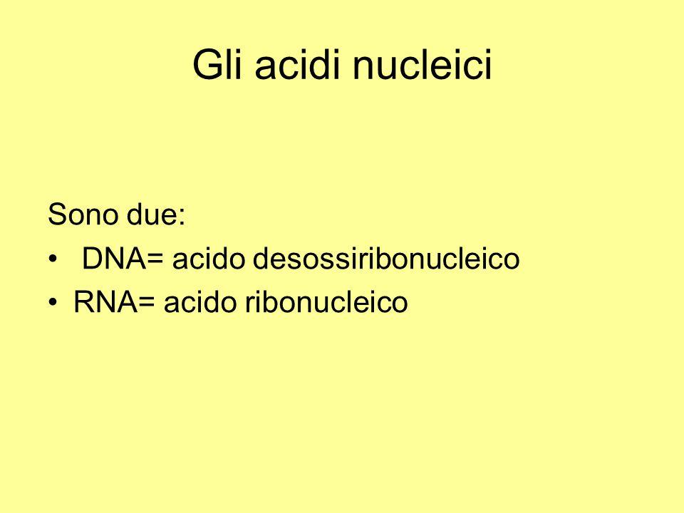 Gli acidi nucleici Sono due: DNA= acido desossiribonucleico