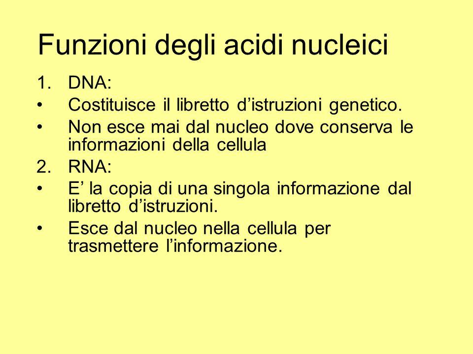Funzioni degli acidi nucleici