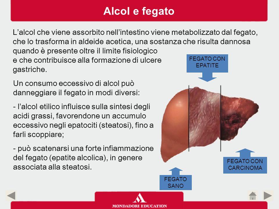 Alcol e fegato