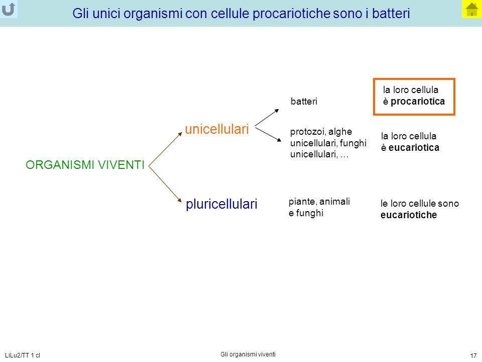 Gli unici organismi con cellule procariotiche sono i batteri