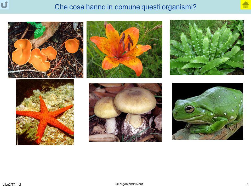 Che cosa hanno in comune questi organismi
