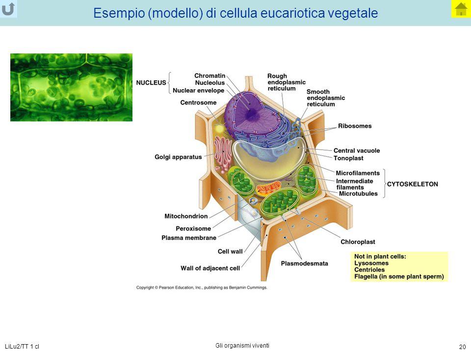 Esempio (modello) di cellula eucariotica vegetale