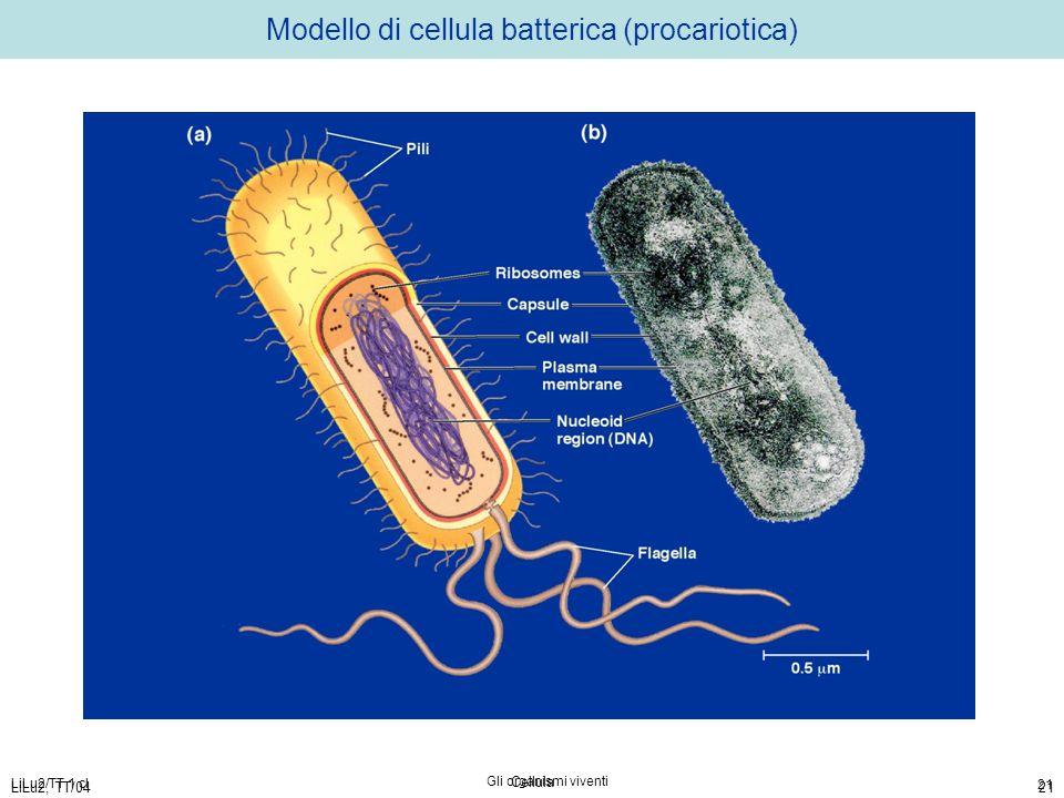 Modello di cellula batterica (procariotica)