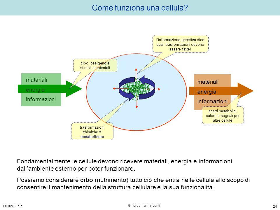 Come funziona una cellula