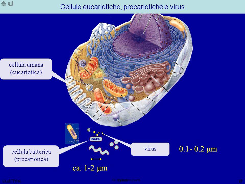 Cellule eucariotiche, procariotiche e virus