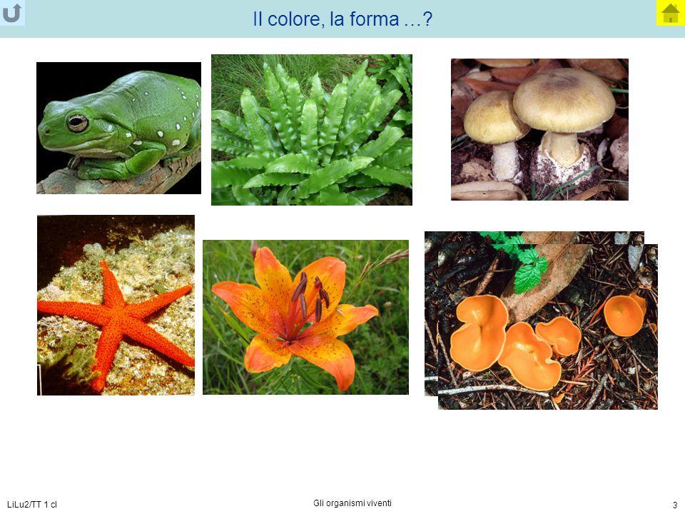 Il colore, la forma … LiLu2/TT 1 cl Gli organismi viventi