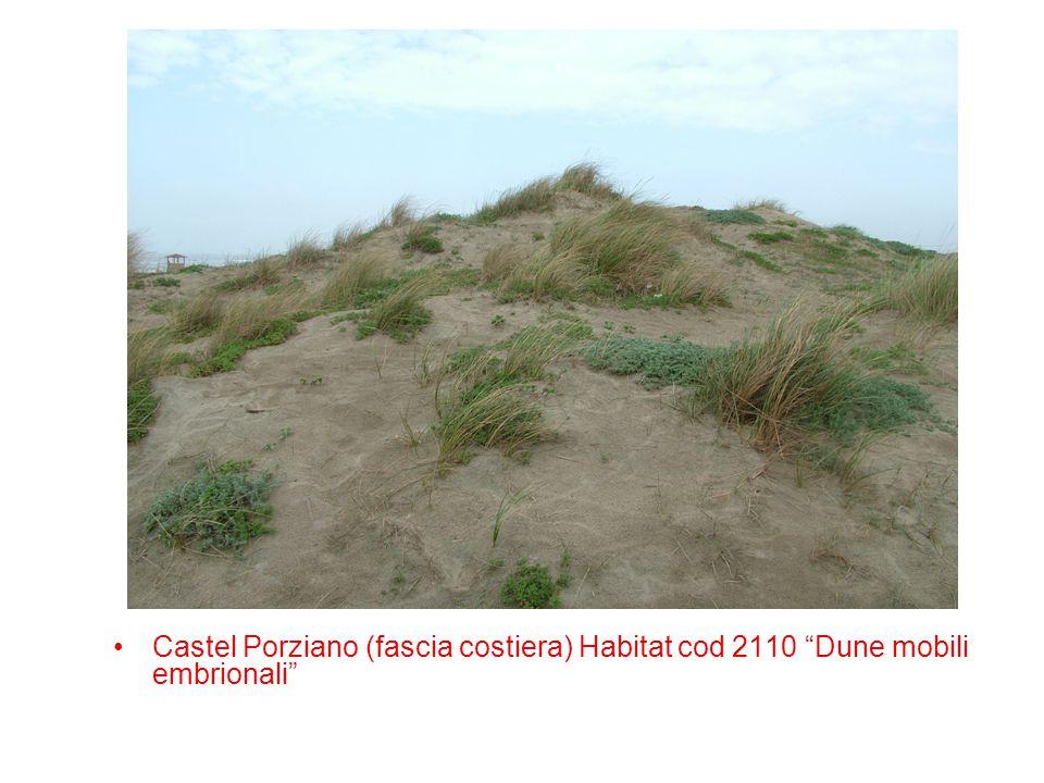Castel Porziano (fascia costiera) Habitat cod 2110 Dune mobili embrionali