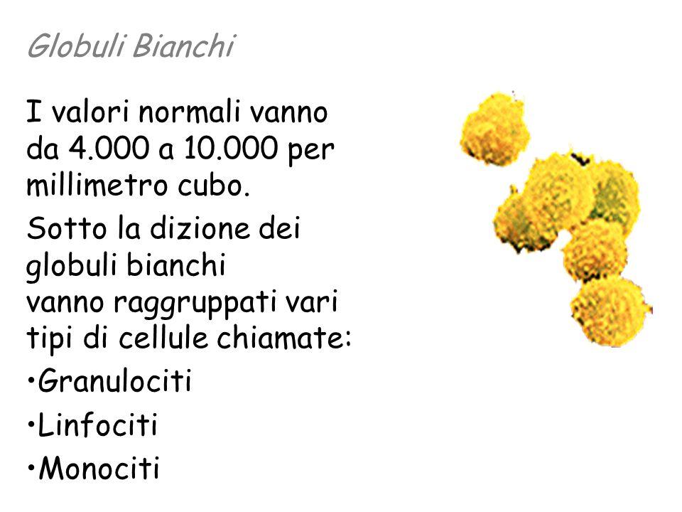 Globuli Bianchi I valori normali vanno da 4.000 a 10.000 per millimetro cubo.