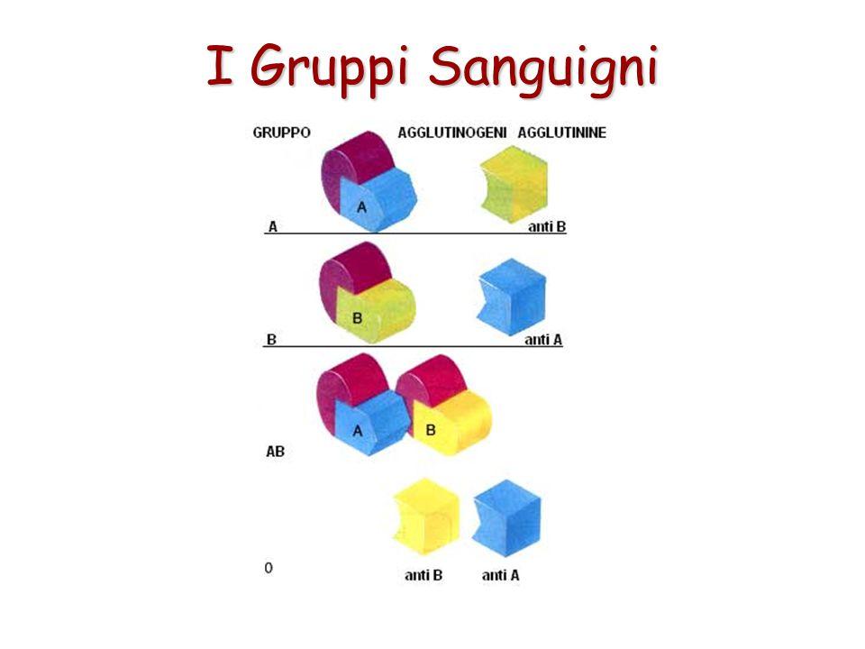 I Gruppi Sanguigni