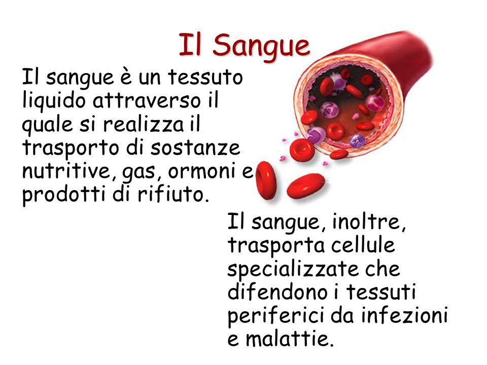 Il Sangue Il sangue è un tessuto liquido attraverso il quale si realizza il trasporto di sostanze nutritive, gas, ormoni e prodotti di rifiuto.