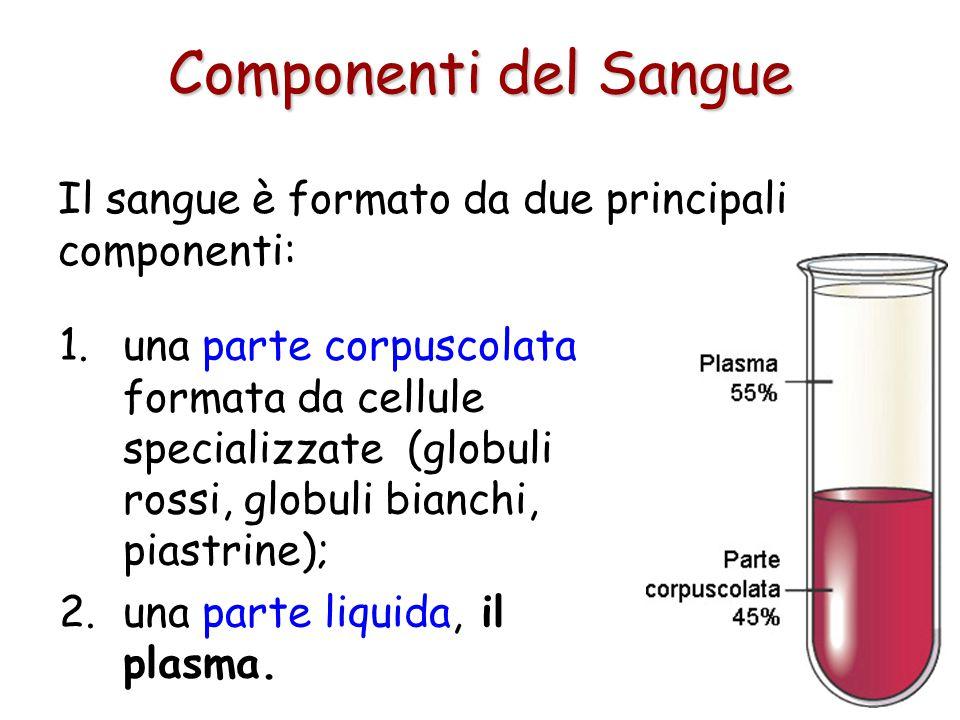 Componenti del Sangue Il sangue è formato da due principali componenti: