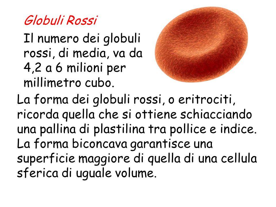 Globuli Rossi Il numero dei globuli rossi, di media, va da 4,2 a 6 milioni per millimetro cubo.