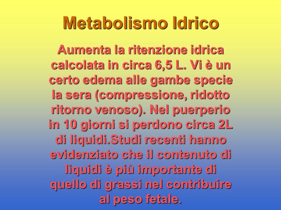 Metabolismo Idrico