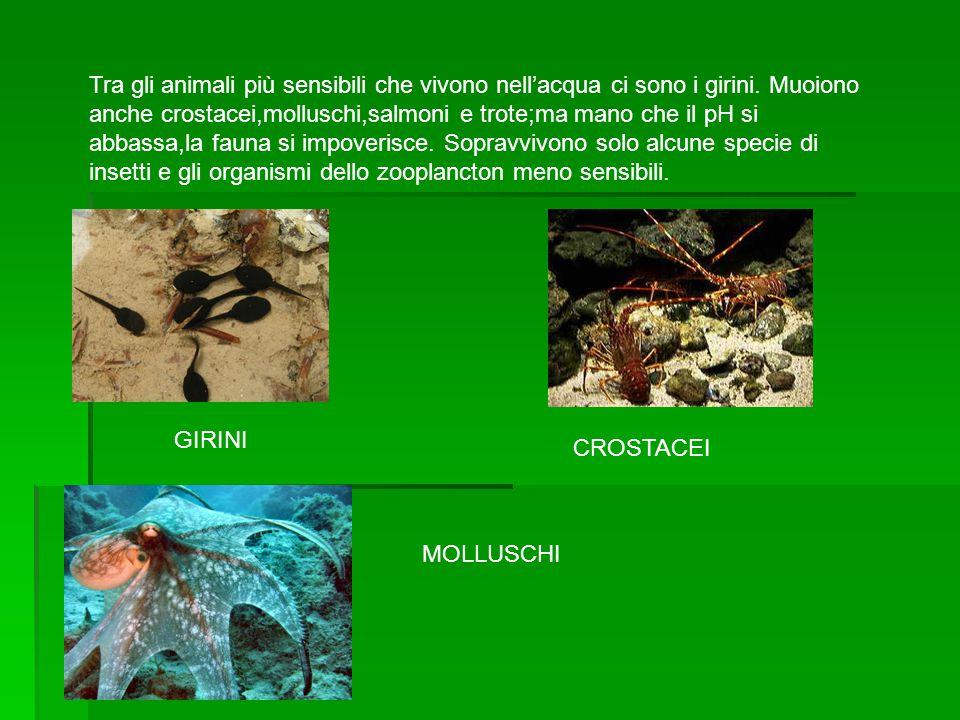 Tra gli animali più sensibili che vivono nell'acqua ci sono i girini